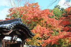 Kyoto temple in autumn Royalty Free Stock Photography