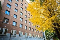 Kyoto universitet på nedgången arkivbild
