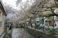 Kyoto wooden house and sakura Stock Image