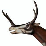 Kyptoceras Mammal Head Stock Image