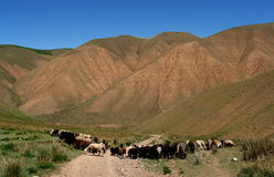 Kyrgyzstan landscape Royalty Free Stock Image
