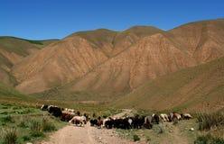 kyrgyzstan liggande Royaltyfri Bild