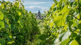 Kyrka i en vingård Royaltyfri Bild