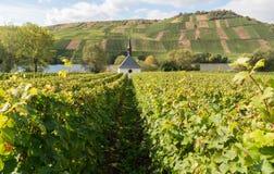 Kyrka och vingård Royaltyfri Bild