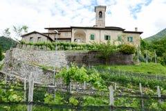 Kyrkan av San Zeno på Salorino omgav vid vingårdar Royaltyfria Bilder