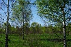 Kyrkasikt från långväga runt om träden arkivbilder