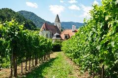 kyrklig vine för filial arkivfoton