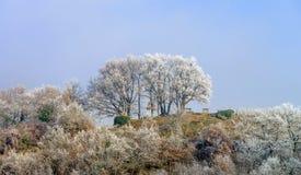 Kyrkliga och djupfrysta träd i liten fransk by Royaltyfria Foton