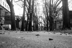 Kyrkogård blad på asfalten Arkivbilder