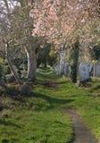 kyrkogårdwalkway Royaltyfri Fotografi
