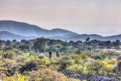 Kyrktaga på en kulle som omges av backar av Guadalcazar, Mexico royaltyfri bild