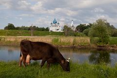 kyrktar suzdal russia Arkivfoton