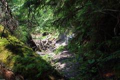 Kysel ravine in Slovak Paradise National park, Slovakia Stock Image