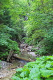 Kysel-Schlucht im Nationalpark des slowakischen Paradieses, Slowakei Lizenzfreie Stockbilder