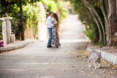 Kyssande folk på bakgrunden av att gå katten Arkivbild
