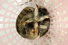 Kyssande omfamning för två förtjusande katter i korg Älskvärd tid för systrar för parfamiljvänner hemma kattungar kelar smyga sig Royaltyfri Foto