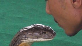 Kyssande ormslut upp lager videofilmer