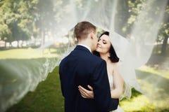 Kyssen av den eleganta bruden och brudgummen under genomskinligt skyler Royaltyfri Foto