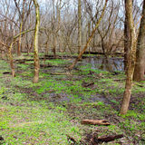 Kyte河洪泛区森林伊利诺伊 免版税库存照片