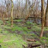 Kyte flodFloodplain Forest Illinois Royaltyfria Foton