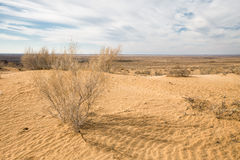 Kyzylkum pustynia Fotografia Royalty Free