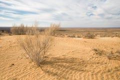 Kyzylkumwoestijn Royalty-vrije Stock Fotografie