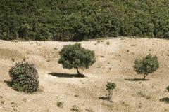 Là où la forêt commence Photo libre de droits