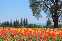 Là où les fleurs sont? images libres de droits