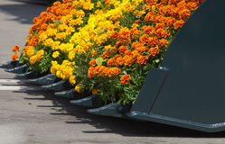 Lámina de Buldozzer con las flores fotos de archivo libres de regalías