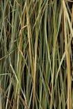 Lámina de la hierba Foto de archivo