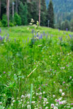 Lámina de la hierba. imagenes de archivo