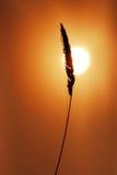 Lámina de la hierba con el sol fotos de archivo libres de regalías