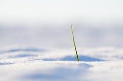 Lámina de la hierba en invierno fotos de archivo