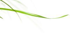 Lámina de la hierba horizontal Imagen de archivo libre de regalías