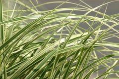 Láminas de la hierba Fotos de archivo