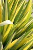 Láminas de la hierba Fotografía de archivo libre de regalías