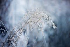 Láminas de la hierba congeladas Imagen de archivo libre de regalías