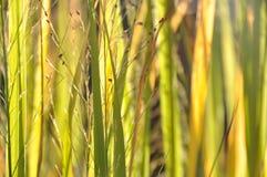 Láminas de la hierba en el sol Imagen de archivo libre de regalías