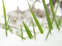 Láminas de la hierba en nieve fotografía de archivo