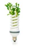 Lámpara ahorro de energía con la planta de semillero verde Foto de archivo libre de regalías