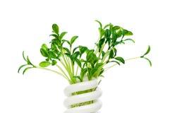 Lámpara ahorro de energía con la planta de semillero verde imagenes de archivo