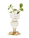 Lámpara ahorro de energía con la planta de semillero verde en blanco Fotos de archivo libres de regalías
