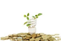 Lámpara ahorro de energía con la planta de semillero verde en blanco Imagenes de archivo