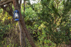 Lámpara azul vieja en el árbol Imagen de archivo libre de regalías