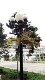 Lámpara de calle con las macetas Imagen de archivo libre de regalías