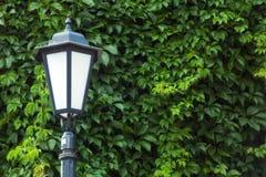 Lámpara de calle del vintage contra la perspectiva de las hojas de la hiedra imagen de archivo libre de regalías