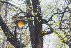 Lámpara de calle en el parque Imagen de archivo