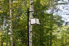Lámpara de calle en el parque Fondo del día soleado de los abedules Imágenes de archivo libres de regalías