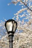 Lámpara de Central Park Foto de archivo libre de regalías