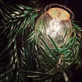 Lámpara de la bombilla en ramas del pino y la sensación conmovedora Fotos de archivo libres de regalías